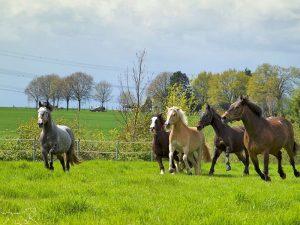 Gesunde Pferde toben gerne mal