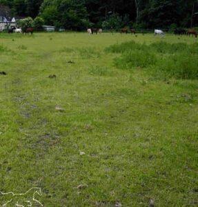 Pferde-Trampelpfad auf der Weide